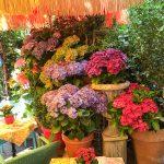 Asamhof: Blumen über Blumen im Playa Cafe & Restaurant
